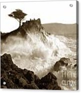 Lone Cypress Tree On  Midway Point Pebble Beach California Circa 1916 Acrylic Print
