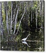 Lone Egret Acrylic Print