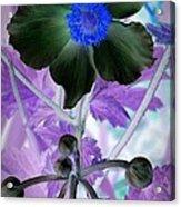 Lone Flower 1 Acrylic Print