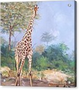 Lone Giraffe Acrylic Print