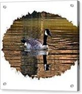 Lone Goose Acrylic Print