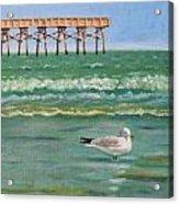 Lone Gull A-piers Acrylic Print
