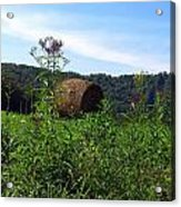 Lone Hay Round Acrylic Print by Willy  Nelson