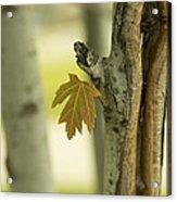 Lone Leaf Acrylic Print