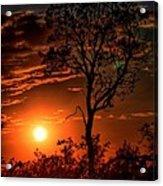 Lone Manzanita Sunset Acrylic Print