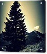 Lone Mountain Pine Acrylic Print