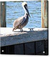 Lone Pelican On Pier Acrylic Print