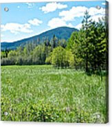 Lone Pine Prairie South Of Polebridge In Glacier Np- Mt  Acrylic Print
