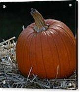 Lone Pumpkin Acrylic Print
