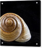 Lone Shell Acrylic Print by Jean Noren