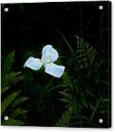 Lone Special Iris Acrylic Print