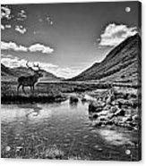 Lone Stag Acrylic Print