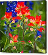 Lone Star Blooms Acrylic Print