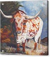 Lone Star Longhorn Acrylic Print
