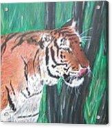 Lone Tiger Acrylic Print