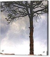 Lone Tree 11351 Acrylic Print