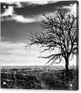 Lone Tree 2 Acrylic Print