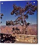 Lone Tree Along The South Rim Acrylic Print