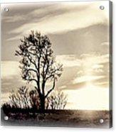 Lone Tree At Dusk Acrylic Print