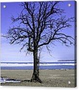 Lone Tree At Fort Gratiot Light House  Acrylic Print