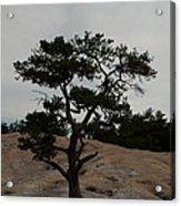Lone Tree In Stone Mountain State Park North Carolina Acrylic Print