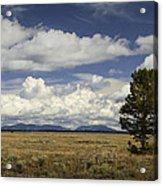 Lone Tree In The Grand Teton National Park Acrylic Print