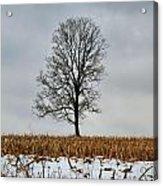 Lone Tree In Winter Acrylic Print