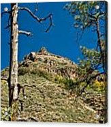 Lone Tree On The Mountain Acrylic Print