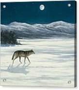 Lone Wolf In Winter   Version 2 Acrylic Print by Steve Swavely