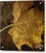 Lonely Autumn Leaf Acrylic Print