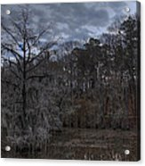 Lonely Bald Cypress Acrylic Print
