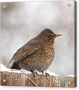 Lonely Bird Acrylic Print
