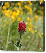 Lonely Clover Acrylic Print