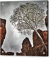 Lonely Gum Tree Acrylic Print by Dirk Ercken