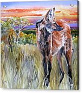 Lonely Lobo Sunset Acrylic Print