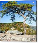 Lonely Lonesome Pine Acrylic Print