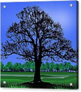 Lonely Old Tree Acrylic Print