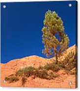 Lonely Pine On The Ocher Hill Acrylic Print
