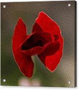 Lonely Poppy Acrylic Print