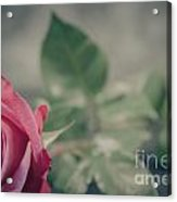 Lonely Rose 2  Acrylic Print