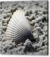 Lonely Shell Acrylic Print