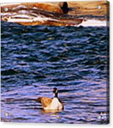 Lonely Swimmer Acrylic Print
