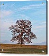 Lonely Tree Acrylic Print