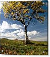 Lonely Tree In Mountain Acrylic Print
