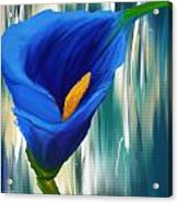 Lonesome And Blue- Blue Calla Lily Paintings Acrylic Print