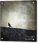 Lonesome Dove Acrylic Print