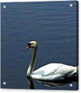 Lonesome Swan Acrylic Print