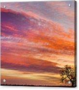 Lonesome Tree Sunrise Acrylic Print