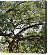 Long Branches Acrylic Print