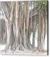 Long Branches Acrylic Print